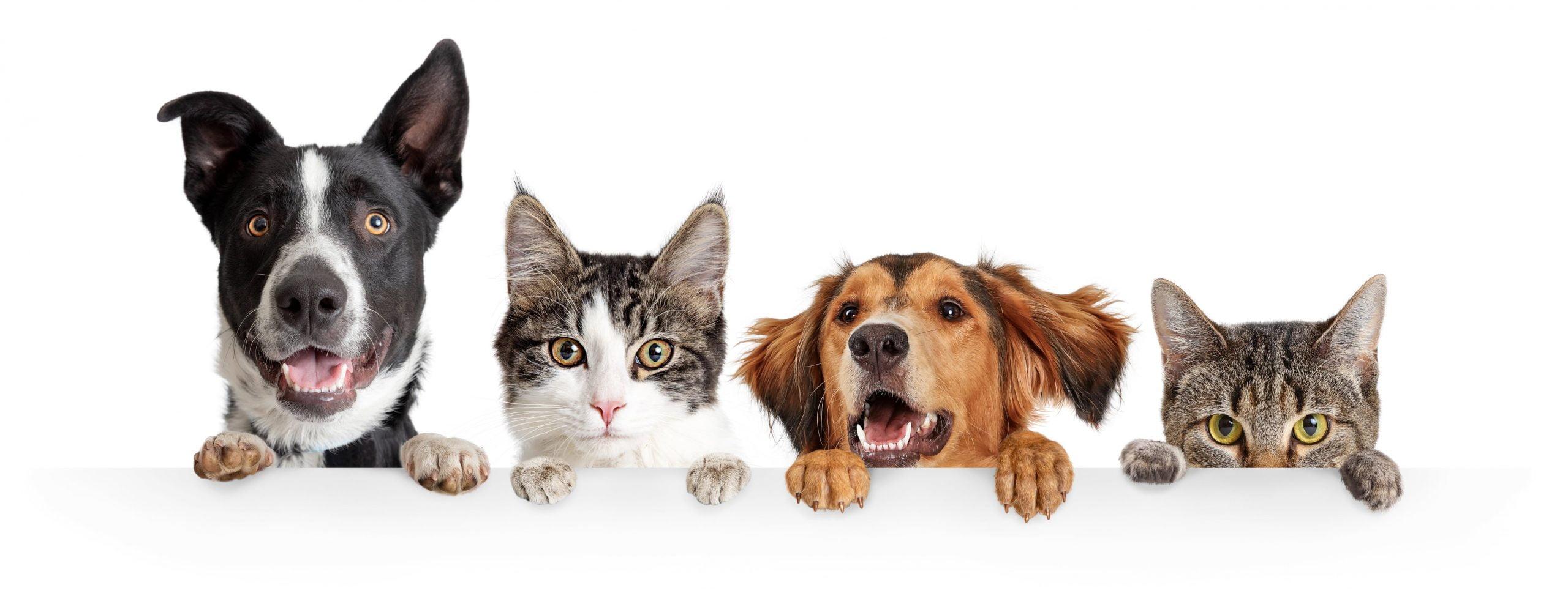 Tonte et toilettage pour chiens et chats